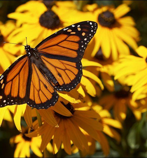 """"""" Butterfly"""""""
