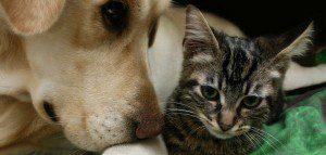 Dog_Cat_Animal_Picture